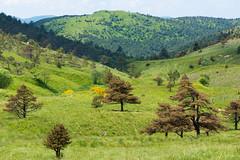 Sensazione_matematica (Danilo Mazzanti) Tags: verde alberi photography foto photos natura fotografia paesaggi monti fotografo danilo mazzanti altaviadeimontiliguri pianidipraglia montiliguri danilomazzanti wwwdanilomazzantiit