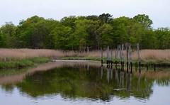 Cheesequake Creek (Dendroica cerulea) Tags: reflection creek newjersey spring stream nj wetlands marsh saltmarsh matawan cheesequakestatepark middlesexcounty cheesequakecreek