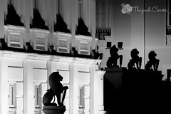 Se preparem! (thaynahfotografia) Tags: brazil blackandwhite photography fotografia maranho thelionking saoluis palaciodosleoes