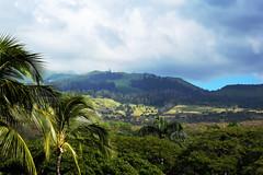mauka from Makena (heartinhawaii) Tags: light plants green clouds palms landscape hawaii maui foliage haleakala hillside makena upcountry mauka southmaui nikond3300 mauiinnovember