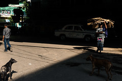 (Jordy B) Tags: dog chien india man colors asia couleurs streetphotography ombre sombre asie extrieur kolkata calcutta homme inde westbengal northindia travelphotography indedunord northemindia