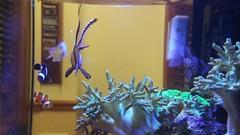 The Aquarium (Smith6612) Tags: life fish water acquarium sealife bowl