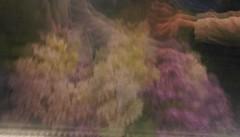 Fragile reflection (Energonik) Tags: reflection lilac fragility birdcherrytree