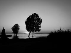 Elements - Water (marco soraperra) Tags: light sunset shadow sea summer sky sun white lake black tree nature water grass silhouette dark landscape fire nikon warm bright earth air nikkor noireblanc