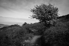 Webber's Post, Exmoor ([Richard Ford]) Tags: blackandwhite monochrome landscape mono moors moor moorland exmoor webberspost