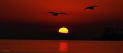 Gulls in the Breaking Sun (beachpeepsrus) Tags: beach birds sunrise seagull