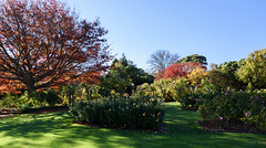 Lush Green (Jocey K) Tags: flowers autumn trees newzealand christchurch roses sky plants leaves gardens shadows lawn may rosegarden monavale