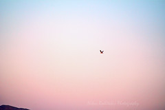 A lonely trip at sunrise (Nikos Roditakis) Tags: birds sunrise nikon g s nikos af nikkor vr heraklion 55200mm f456 d5200 roditakis