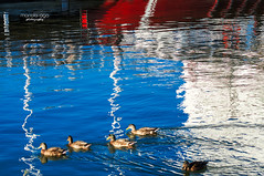 swimming in the sky (mariola aga) Tags: blue red sky abstract reflection water birds swimming boat ducks surface channel thegalaxy saariysqualitypictures