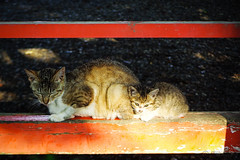 Today's Cat@2016-06-27 (masatsu) Tags: cat pentax catspotting mx1 thebiggestgroupwithonlycats