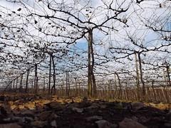 Passeando pela aldeia II (Claudia Mendes2015) Tags: rural natureza paisagem paisagens
