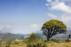 A tree- OOty (Ramesh M Photography) Tags: blue india mountain tree nature clouds hills tamilnadu ooty westernghats ghats 2013 incredibleindia mukurthinationalpark indianphotography southtamilnadu westerghats digitalslrphotography digitalslrphotographymagazine tamilnadutourism discoverofindia rameshmuthaiyan rameshmphotography rameshmclick rameshm