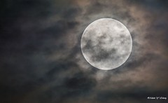Moody Moon (   (Thank you, my friends, Adam!) Tags: moon macro art closeup wow lens photography nikon gallery moody photographer fine telephoto excellent dslr        adamzhang