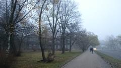 DSC_1130 (Alex Peter Warren) Tags: peterhof november autumn