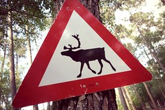 Pompéjac - Pinpin et Pilou (2) (Office de Tourisme du bazadais) Tags: et parc pinpin rennes pilou landes gironde animalier bazadais sudgironde girondines pompéjac
