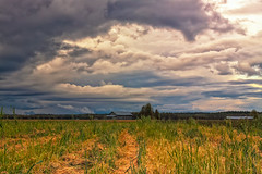 Storm Clouds Over The Fields (k009034) Tags: 500px wooden copy space finland matkaniva oulainen outdoors agriculture autumn barn building clouds countryside dramatic sky fields forest nature no people old rural trees weather teamcanon copyspace dramaticsky nopeople