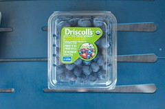Driscoll's blueberries (Marisa | Food in Jars) Tags: strawberries raspberries blackberries blueberries berrytour driscollsberries berrybloggers