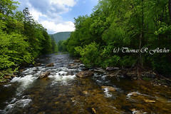 Spring along Cranberry River (travelphotographer2003) Tags: usa green ecology spring solitude westvirginia serenity relaxation exploration idyllic freshness appalachianmountains purity tranquilscene outdoorrecreation alleghenymountains monongahelanationalforest beautyinnature rushingstream cranberryriver nativetroutstream thomasrfletcher