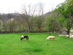 Beljanica Lisine 102 (jecadim) Tags: horses green nature landscape spring hiking serbia meadow srbija beljanicalisine