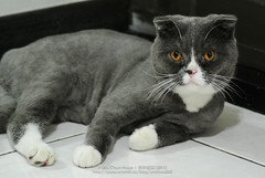 DSC_4552 (archiwu945) Tags: china cat t contax kaohsiung   carlzeiss nikon1 g90f28 nikon1v1