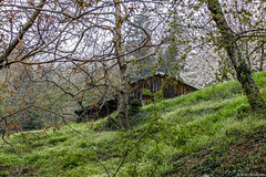 The Cabin in the Woods (ilias nikoloulis) Tags: trees lake grass easter wooden spring cabin woods blossom greece fujifilm shack trikala thessaly plastira karditsa f70exr