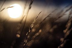 Sunset through the grass (Raven Photography by Jenna Goodwin) Tags: sunset summer sun nature grass sunshine 50mm golden aperture dof minolta bokeh wide hour rs oof f17 opem flickrfriday lifeislikeaboxofchocolates