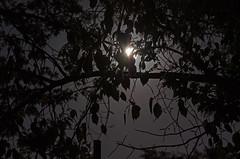 Moonrise (Pahz) Tags: longexposure autumn trees moon tree leaves wisconsin night dark leaf nighttime moonrise