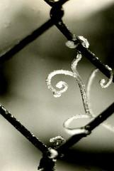 winter in holland (15) (bertknot) Tags: winter winterinholland