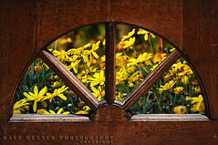 Country Kitchen Window (Kaye Menner) Tags: wood old flowers red window floral yellow daisies vintage happy photography flora arch view bright antique retro nostalgia nostalgic redwood aged yellowflowers windowframe redyellow yellowred oldwindow countrykitchen archedwindow woodenwindow yellowdaisies timberwindow antiquewindow viewthroughwindow yellowflora yellowfloral kayemennerphotography kayemennerfloral kayemenner kayemennerantique countrykitchenwindow daisyview
