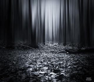 Dark forest blue....
