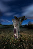 Cuentos nocturnos (raul_lg) Tags: longexposure sky españa tree night clouds canon stars arbol noche spain cielo nubes estrellas nocturna soria contaminacion linterna mark3 largaexposicion castillayleon raullopez canon1635 solarforce canon5dmarkiii raullg