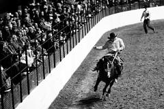 Control (Thomas Hawk) Tags: bw horse usa cowboy texas unitedstates unitedstatesofamerica rodeo dfw fortworth fav10 fortworthstockshowrodeo fortworthstockshowandrodeo dmudallas012011