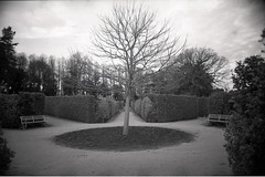 Wentworth Castle Union Jack Garden (pho-Tony) Tags: camera blackandwhite bw film monochrome rollei 35mm point shoot eagle iso400 surveillance wide police panoramic ishootfilm automatic maco prego r1 24mm rodinal ricoh compact micron lubricated 30mm ricohr1 wentworthcastle filmisnotdead rolleipregomicron wentworthcastlegardens macoeagle multicamsource filmmacoeagle
