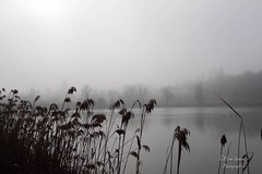 Avalon? (MagaMag80) Tags: park winter mist lake nature water misty lago natura nebbia canebrake 24105mm canneto canoneos500d parcocavalagonord
