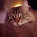 catzilla_face-3