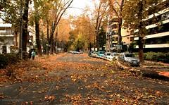 RICARDO LYON | PROVIDENCIA (Pablo C.M || BANCOIMAGENES.CL) Tags: chile city autumn santiago ciudad otoo providencia