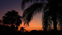 First Light (Jim Mullhaupt) Tags: morning blue trees wallpaper sky orange silhouette yellow clouds sunrise palms landscape dawn flickr florida bradenton mullhaupt jimmullhaupt