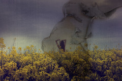 Burning Alive (harriet.bols) Tags: flower texture girl field yellow paper inspired burning layer alevel brookeshaden