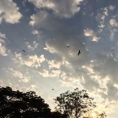 Kites in the Sky (InvaderXan) Tags: india 雲 assam インド tezpur ভারত অসম তেজপুর