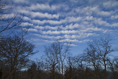 Patterns in the Sky (brucetopher) Tags: blue trees light sky cloud snow cold clouds forest landscape skies wind capecod massachusetts bluesky 7d meander brewster float frigid cloudysky airy drifting winterlandscape winterscene cloudpattern canon7d brucetopher coldwinterlandscape