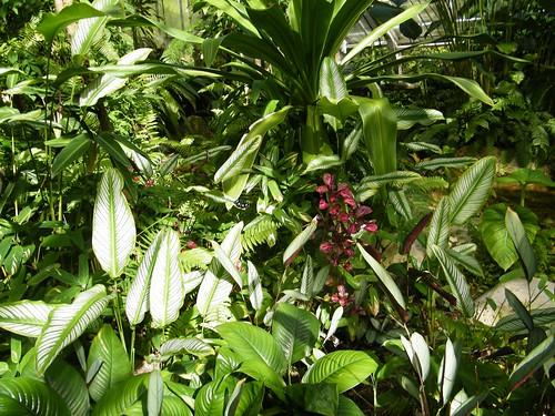 Kuranda Butterfly Sanctuary 026