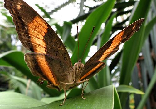 Thumbnail from Wild Life Sydney Zoo