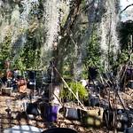 Dormant hosta garden thumbnail