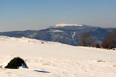 a Rozsály / the Igniş peak (debreczeniemoke) Tags: winter snow gutin hó tél rozsály canonpowershotsx20is gutinhegység munţiigutâi igniş munţiigutin gutinmountains