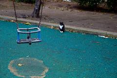 A rainy day tale (gyuri200) Tags: playground cat swing static stare gaze
