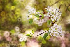 spring (kinga.lubawa) Tags: flowers flower colors canon spring sensual kwiaty kwiat sonnar kolory kolorowe soneczny sonecznie canon6d