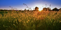 Sunset at Home (andtede) Tags: sunset italy sun home field sunshine landscape ray wheat
