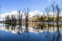 Mondego floods... (Alfredo Mateus Photography) Tags: city trees portugal water river coimbra floods mondego