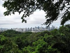 """Vue sur les gratte-ciels de Panama City depuis le Parque Natural Metropolitano <a style=""""margin-left:10px; font-size:0.8em;"""" href=""""http://www.flickr.com/photos/127723101@N04/26727273743/"""" target=""""_blank"""">@flickr</a>"""