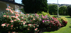 All the flowers (quintinsmith_ip) Tags: flowers grass hotel grasmere grounds wordsworth wordsworthhotelandspa